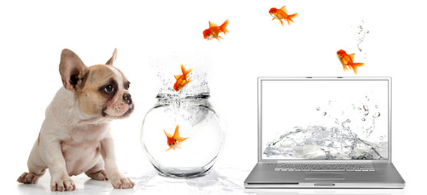 Puppy counting goldfish jumping into a bowl from a laptop