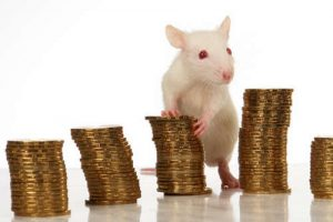 Albino rat leaning on piles of coins