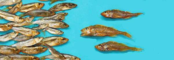A school of fish with 3 fish swimming against the stream