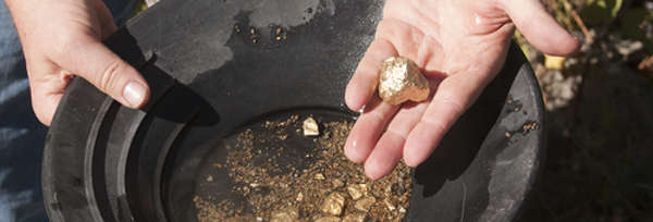 Panning for Gold panning - man finding at least a nugget or two